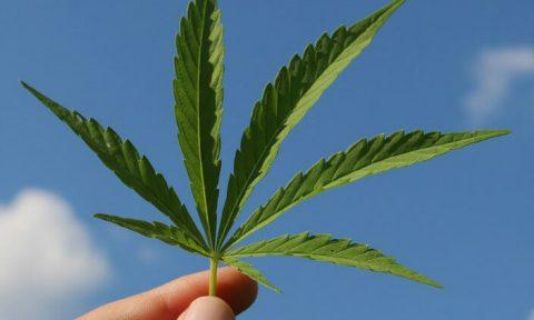 Wiet legaliseren Luxemburg