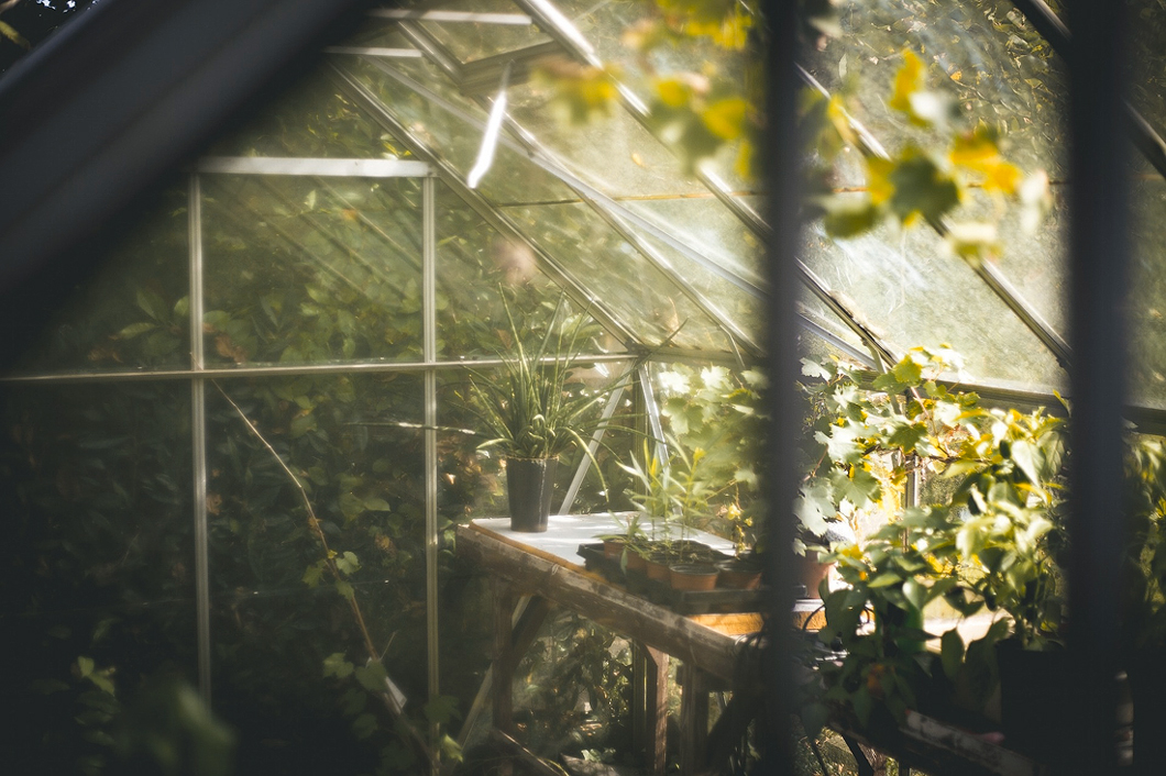 plantenkas zacht licht - de toekomst van legale wiet teelt