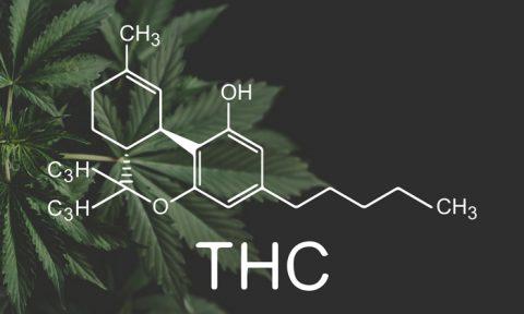 THC - de meest bekende cannabinoïde in cannabis