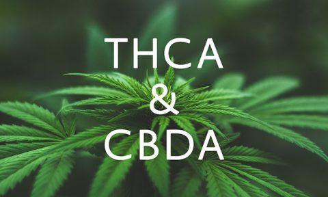 THCA en CBDA in wiet