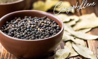 Het terpeen caryofylleen in wiet komt ook voor in zwarte peper